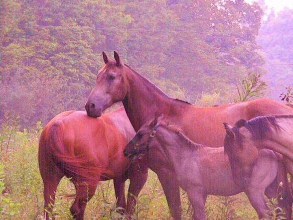 horsebeauty3