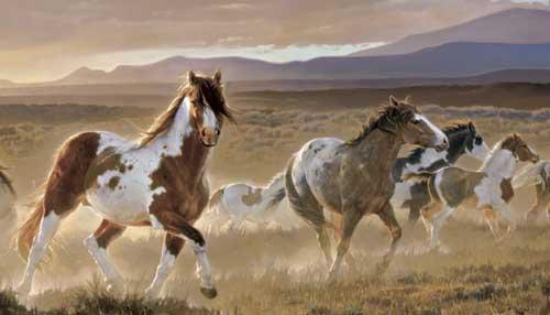 horses216