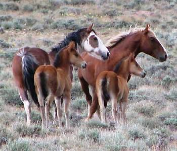 horses218
