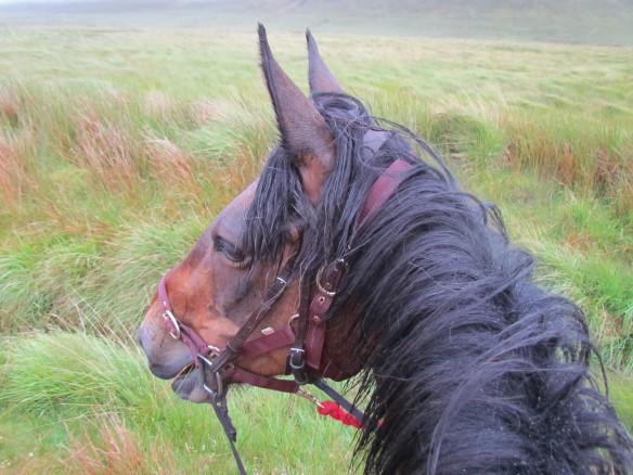 horse147