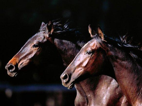 beautyhorse7
