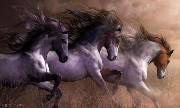 beautyhorse5