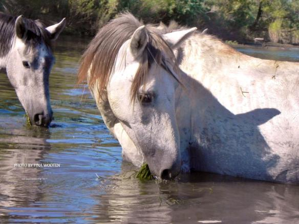 We are here with you... The Wild Salt River Horses.. ♥Photo By Tina Wooten — at Tonto National Forest.
