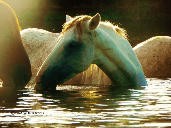 The Heavenly Salt River Wild Horses... ♥Photo By Tina Wooten