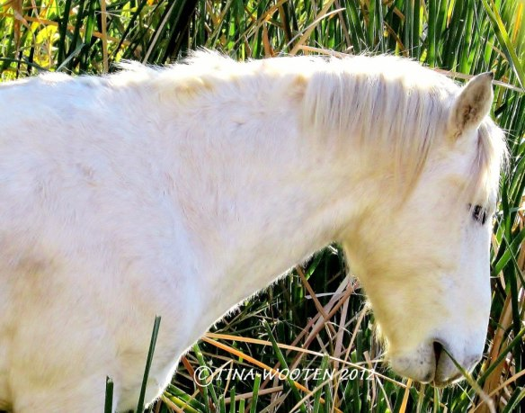 Heavenly Presence.   Photo By Tina WootenTina's Favorite Salt River Wild Stallion — at Tonto National Forest.