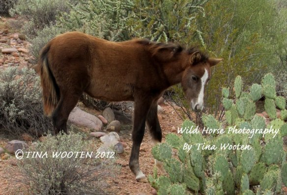 It is a Heavenly Blessing to see a wild foal..Photo By Tina Wooten