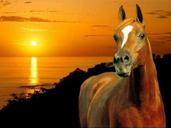 horsebeauty8