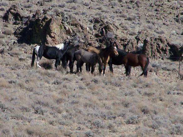 horsescraigdowner1