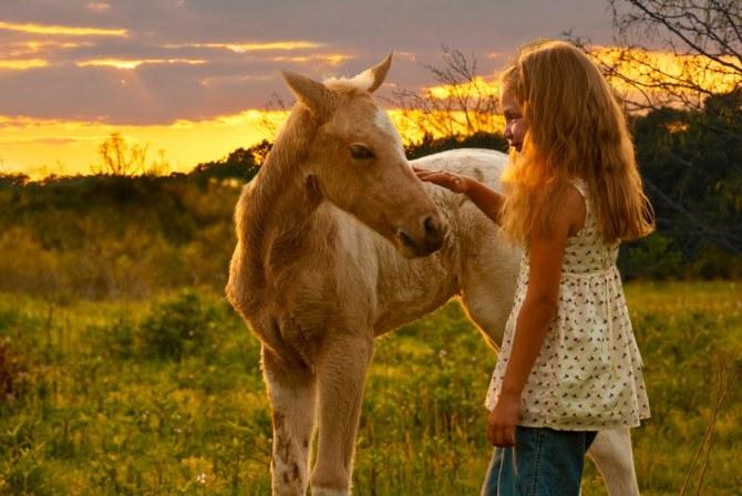 horsetrustus2