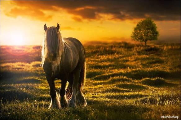 horsebeautysamuel