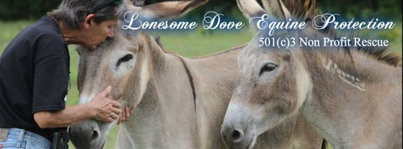 horselonesomedoveequineprotection1